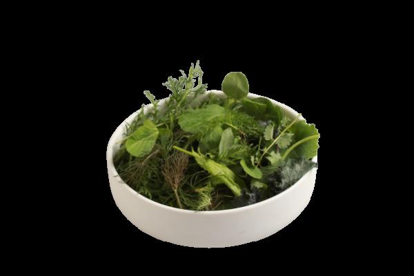 Wiesenkräutersalat