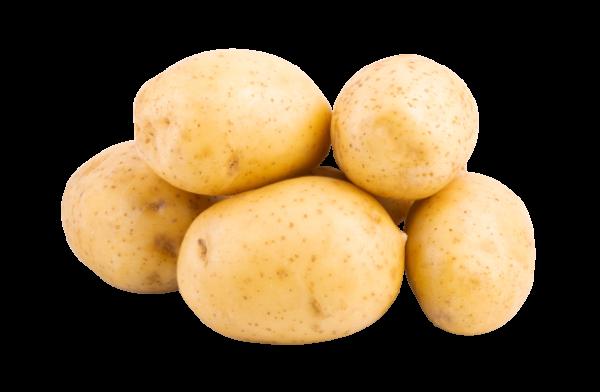 Kartoffel festkochend gewaschen